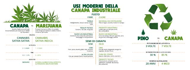 infografica Canapa