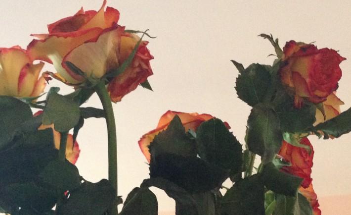 GS_rose@