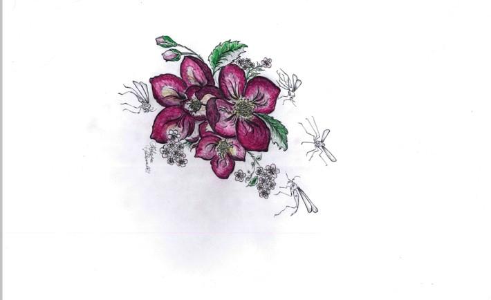 Petali e zanzare: Giuditta Di Cristinzi
